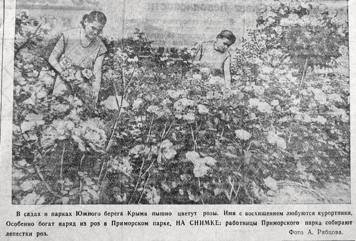 002_roses_1956.jpg