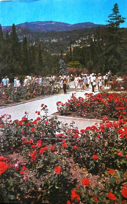 011_1972_nikitsky_botanical_garden_roses.jpg