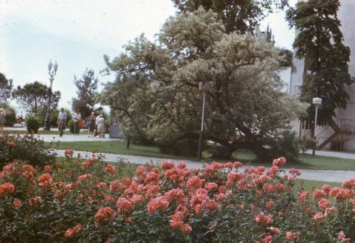 022_yalta_roses_1979.jpg