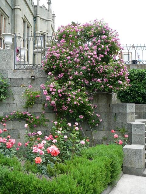 aloupka_roses_001.jpg