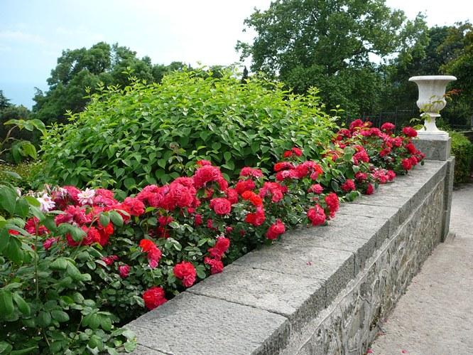 aloupka_roses_004.jpg