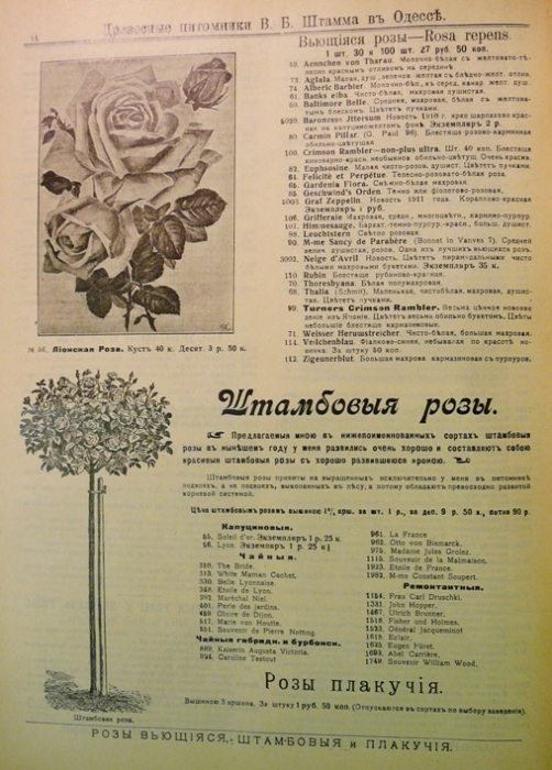 catalogue_roses_stamm_005.jpg
