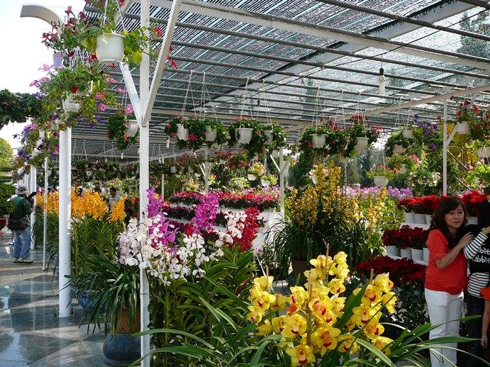 flowers_of_dalat_001.jpg