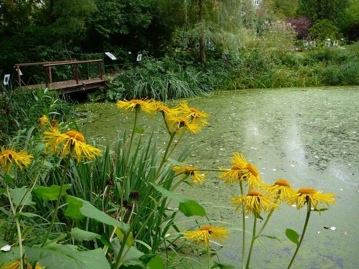 Тверской ботанический сад