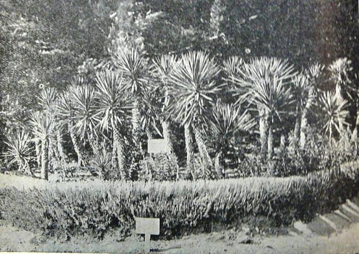 massandra_1908_002.jpg
