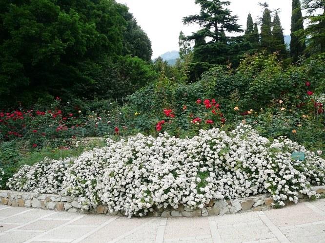 nikitsky_garden_roses_001.jpg