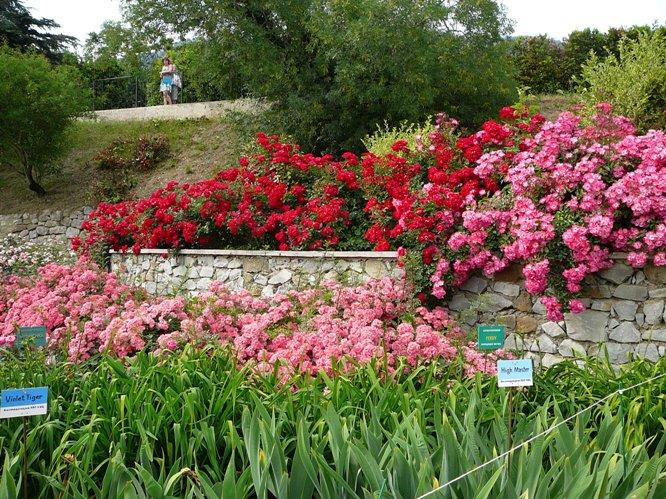 nikitsky_garden_roses_003.jpg