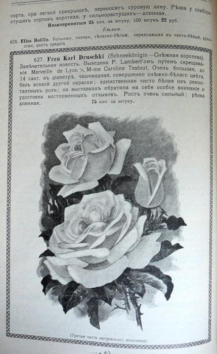 p1260697.jpg