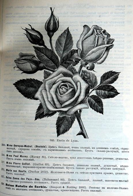 p1260749.jpg
