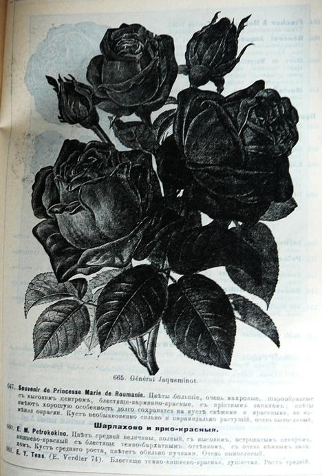p1260756.jpg