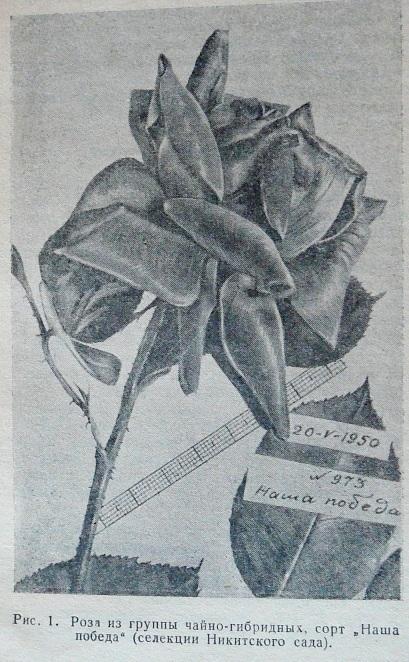 p1470282.jpg