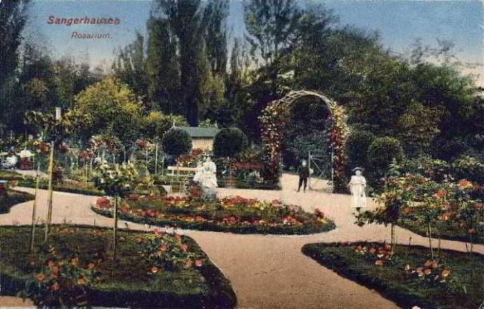 rosarium_europa_005_1908.jpg