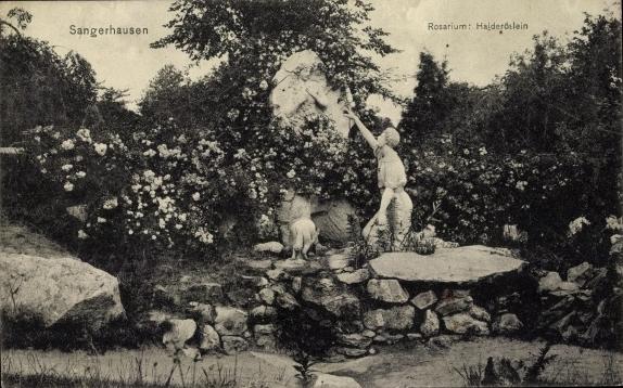 rosarium_europa_006_1914.jpg