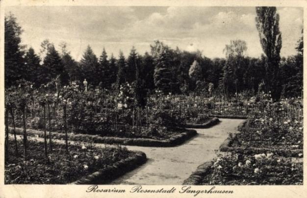rosarium_sangerhausen_013_1935.jpg