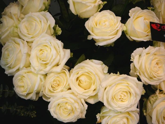 rose_gussie_001.jpg