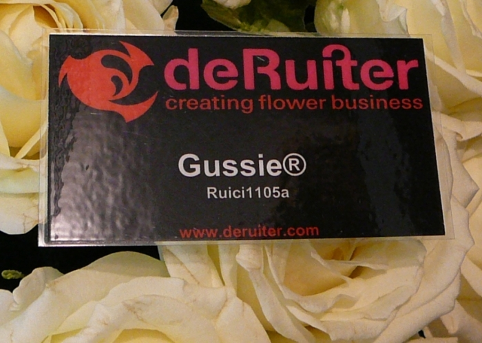 rose_gussie_002.jpg