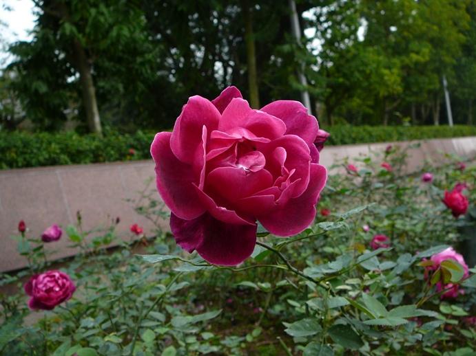 rose_mausoleum_hanoi.jpg