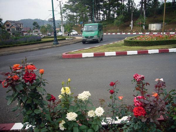 roses_of_dalat.jpg