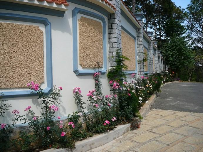 roses_vietnam.jpg