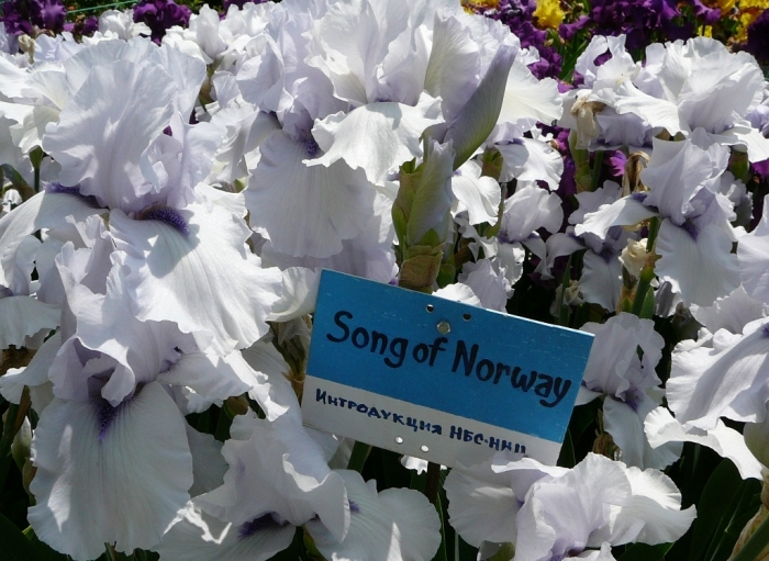 song_of_norway.jpg