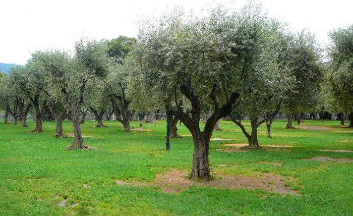 jardin_arena_cimiez_001.jpg