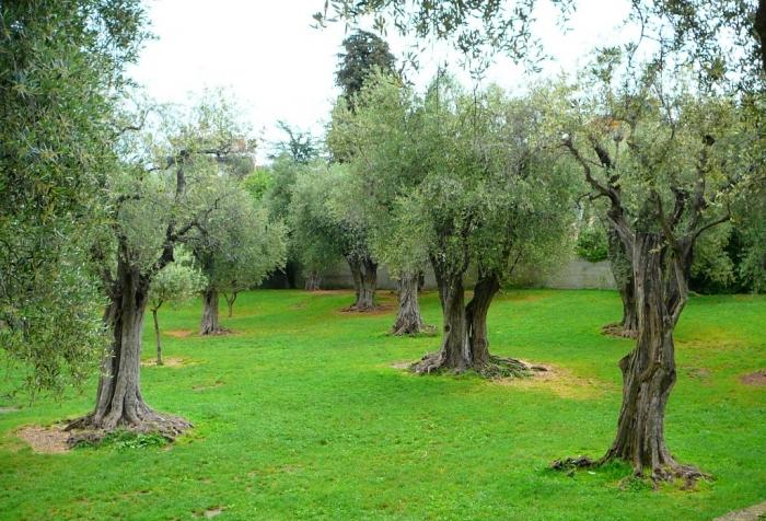 jardin_arena_cimiez_002.jpg