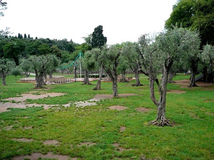 jardin_arena_cimiez_005.jpg