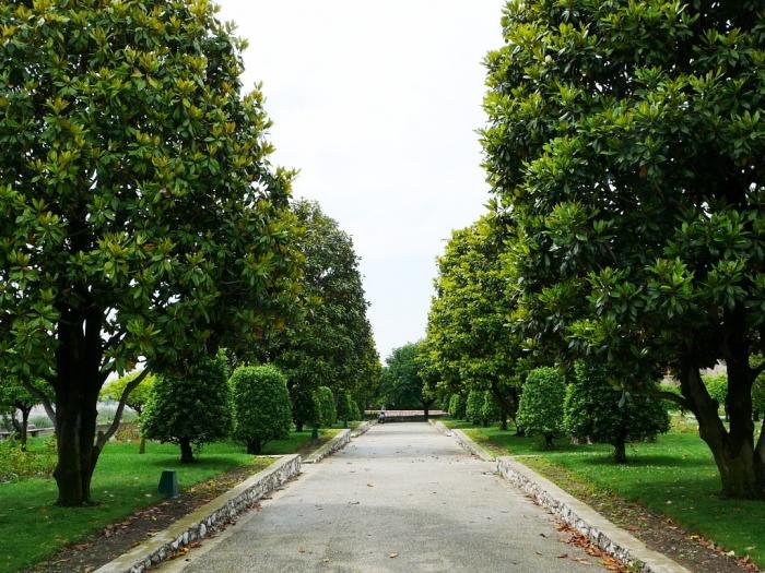 jardin_cimiez_004.jpg