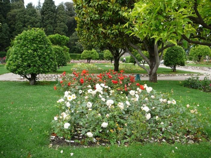 roses_cimiez_008.jpg