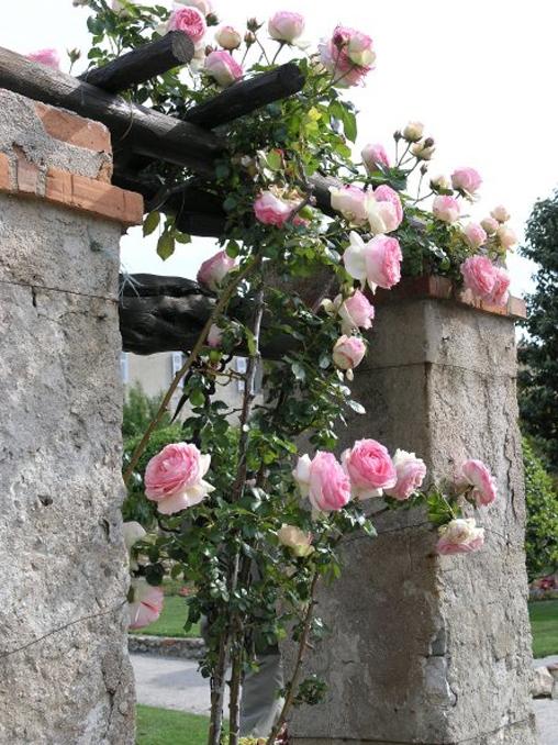 roses_cimiez_018.jpg