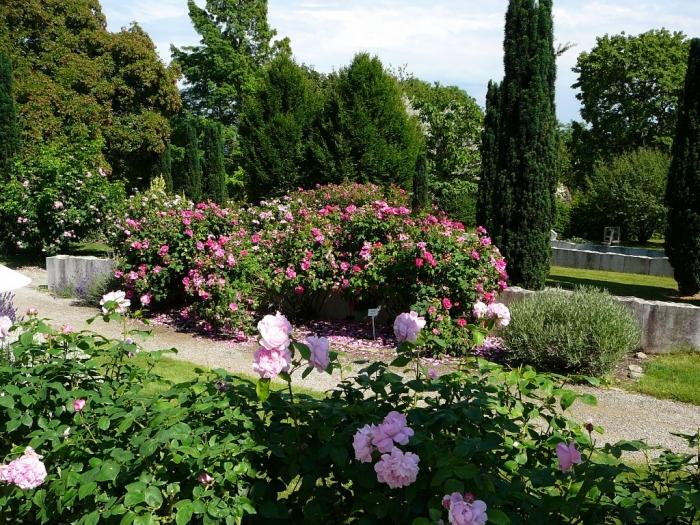 roses_de_erfurt_003.jpg