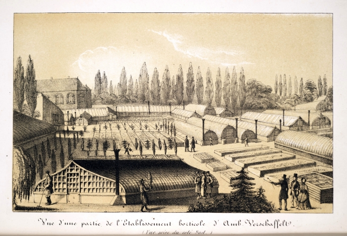 verschaffelts_nursery_in_ghent.jpg