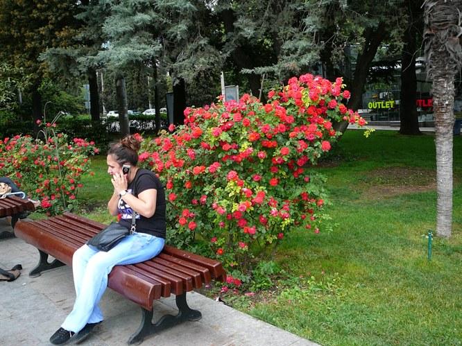 yalta_roses_002.jpg