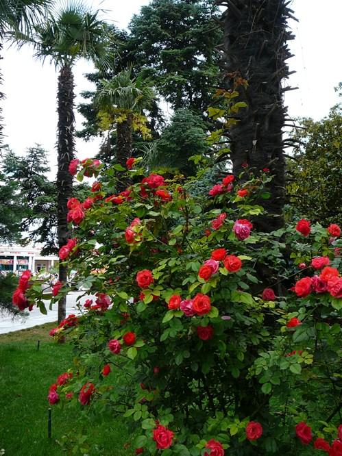 yalta_roses_004.jpg